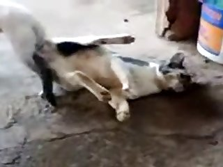 11.dog Knotted To Cat